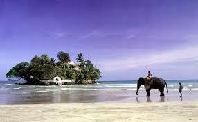 Rondreis Sri Lanka strand olifant